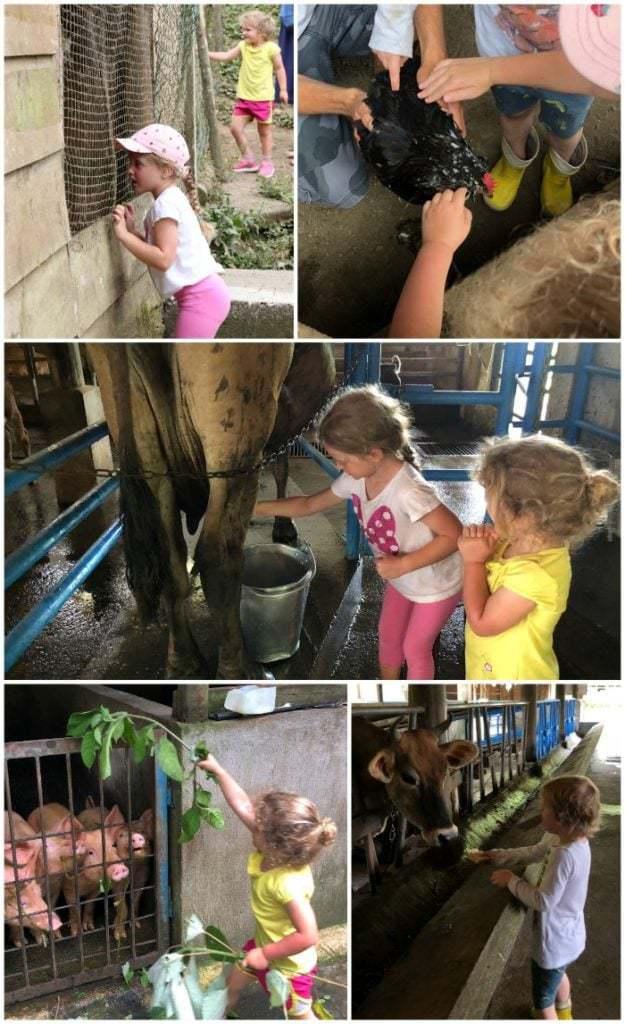 Farm Tour Rancho Margot Costa Rica.