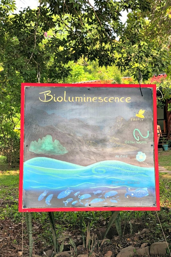 Bioluminescence painted sign in Costa Rica