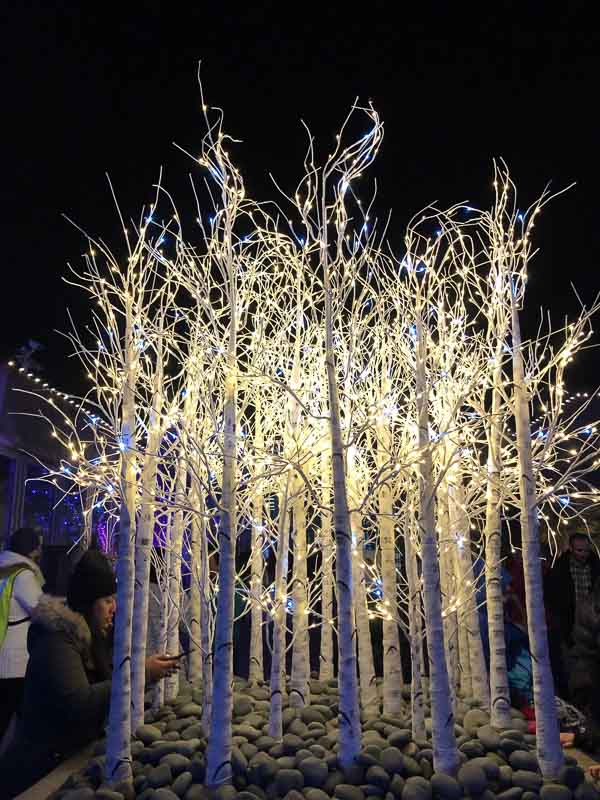 aspen tree white light display at denver botanic