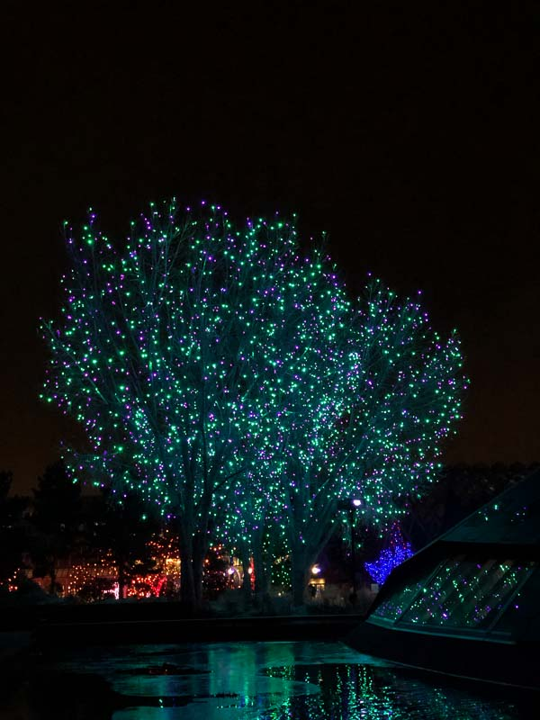 large tree with turquoise lights blossoms of light