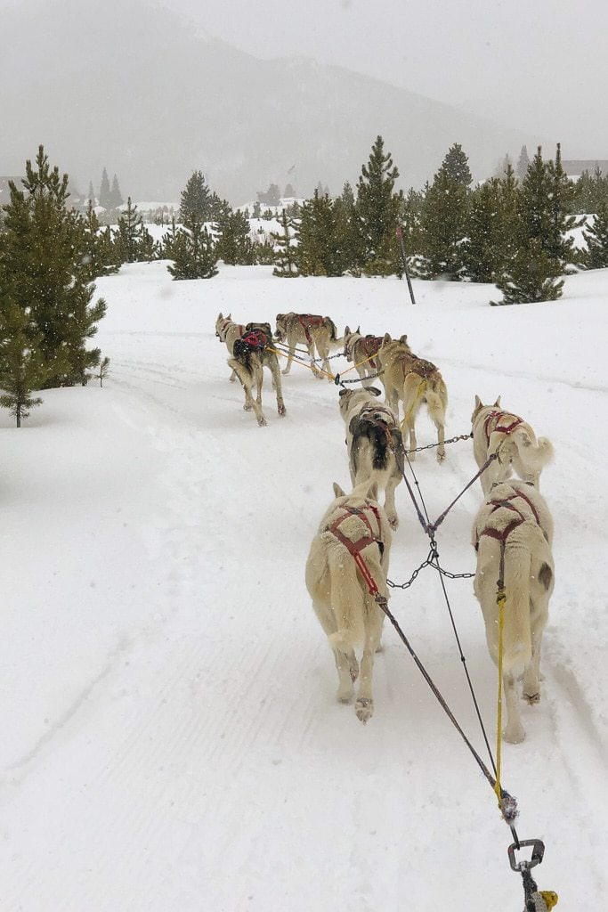 husky dogs pulling sled in snow