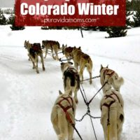 a sled tour of Colorado, led by Huskies.